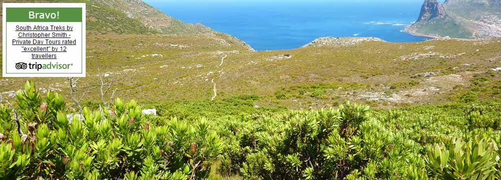Table Mountain guided treks Trip Advisor best rated