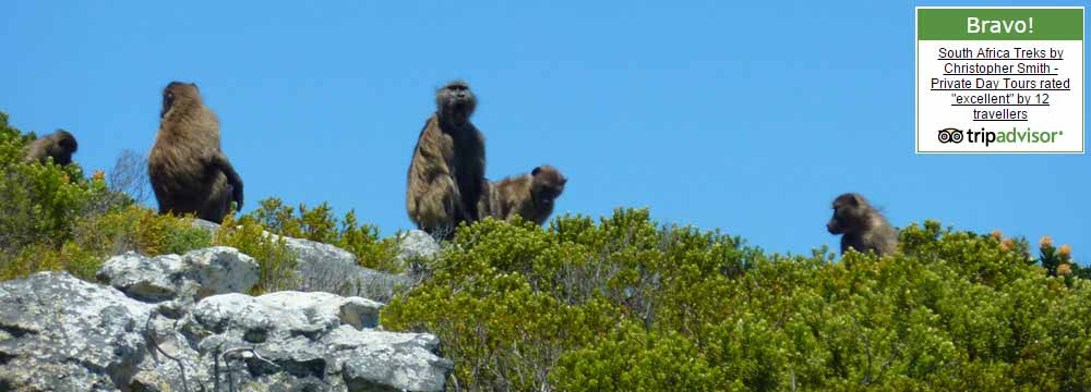South Africa Cape Point guide Chistopher Smith Table Mountain