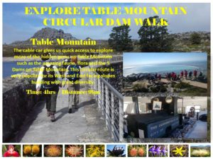 Table Mountain dams